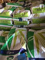 Семена кукурузы НК ФАЛЬКОН. Упаковка 1 п.е. Производитель Syngenta.