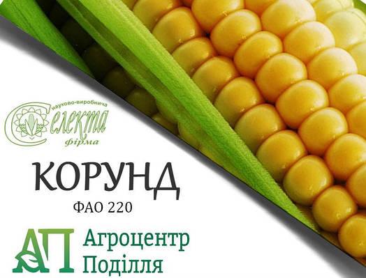 Семена кукурузы КОРУНД ФАО 220