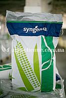 Насіння кукурудзи СИ Аладіум семена кукурузы Аладиум ФАО 280