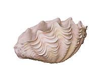 Скульптура ракушка из полиуретана AK 1306