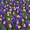 Арт-набор Утренний сон (луковицы цветов)