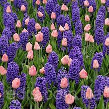 Арт-набір Ранковий сон (цибулини квітів)