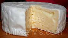 Закваска для сыра с белой плесенью Penicillium Candidum (500 л)