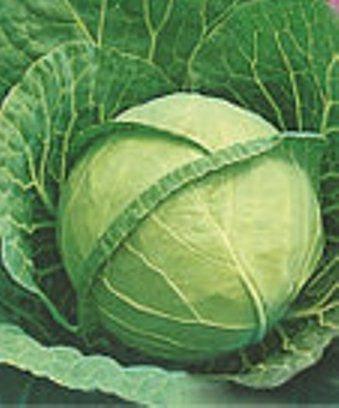 Семена капусты Ольга , фото 2