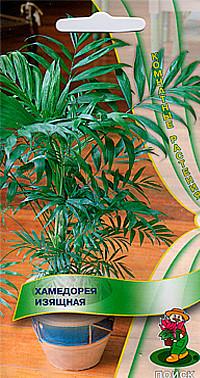 Хамедорея Изящная, семена