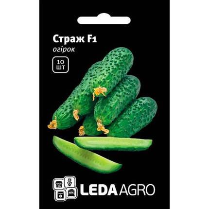 СТРАЖ (314) F1 / STRAZH (314) F1, 10 семян — огурец партенокарпический, Yuksel Seeds, фото 2