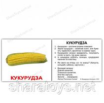 """Обучающие украинские мини карточки с фактами """"Овощи"""""""