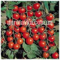Томат детермінантний (чері) Старскрім F1 ранній, (1000 нас.) Lark Seeds