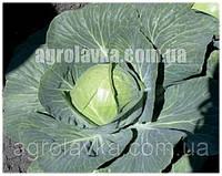 Капуста белокочанная ПасаденаF1 (50-55 дней) семена калиброванные (1000 нас.) Lark Seeds