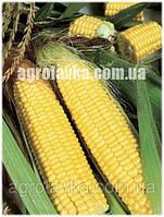 Кукуруза сахарная (Sh2 тип) Світ Парадайз F1 (72 дня) (2500 нас.) Lark Seeds