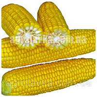 Кукуруза сахарная (Sh2 тип) Шамо F1 (73 дня) (2500 нас.) Lark Seeds