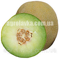Дыня Посол F1 (65-70 дней), непревзойденный вкус, (100 нас.) Lark Seeds