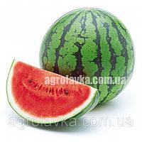 Семена арбуза Юмми F1 (68-70 дней) ранний 8-10 кг (1000 нас.) Lark Seeds