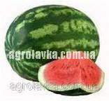 Арбуз АУ-Продюсер (80 дней) (0,5 кг) Lark Seeds