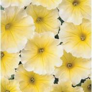 Петуния Мираж F1 желтая  1.000 семян   Pan American