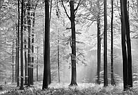 Фотообои бумажные на стену 366х254 см 8 листов: природа, Авалон №115, фото 1