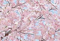 Фотообои бумажные на стену 366х254 см 8 листов: Розовые цветы №155, фото 1