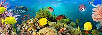 Фотообои флизелиновые на стену 366х127 см 4 листа: Подводный мир  №860, фото 1