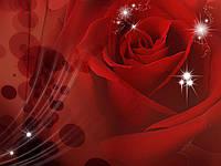 Фотообои бумажные на стену 368х254 см : Бордовая роза (8-010P8CN), фото 1