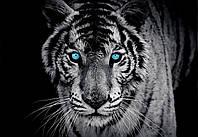 Фотообои бумажные на стену 368х254 см : Тигр (153P8CN), фото 1