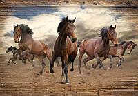Фотообои бумажные на стену 368х254 см : Лошади (10083P8CN), фото 1