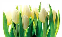 Фотообои готовые 368x254 см Бело-зеленые тюльпаны (894.20766), фото 1