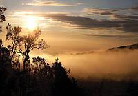 Фотообои готовые 368x254 см Восход солнца над лесом (10137CN)