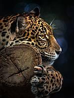 Фотообои готовые 184x254 см Леопард (11892CN)