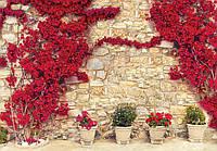 Купить фотообои цветы 3D на стену 368x254 см : Цветы на камнях CN3581