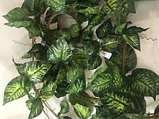 Искусственная лиана диффенбахия(5 шт в упаковке), фото 2