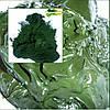 Паста хлореллы органическое удобрение для рыбоводства