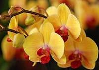 Орхидеи и сопутствующие товары
