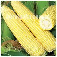 Кукуруза сахарная (Sh2 тип) Хаммер F1 (90 дней) початок 26 см, (25000 нас.) Lark Seeds