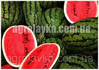 Семена арбуза Ледус F1 (70-72 дня) ранний 8-10 кг (1000 нас.) Lark Seeds