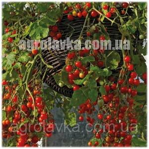 Купить Насіння томату детермінантного (чері) Френзі F1 середньоранній, (5000 нас.) Lark Seeds