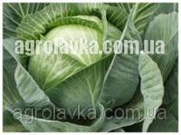 Капуста белокочанная КапиталF1 (45 дней) семена калиброванные (1000 нас.) Lark Seeds