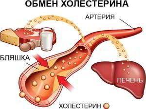 Обмен холестерина Картинка 8.