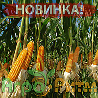 Кукурудза Патриція Економ