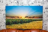 """Картина на холсте """"Поля подсолнуха и пшеницы. Рассвет. Природа Украины"""". 80х50 см."""