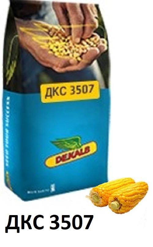 Семена кукурузы ДКС 3705 (ФАО 300) / Монсанто/ Насіння кукурудзи ДКС 3705 (ФАО 300)