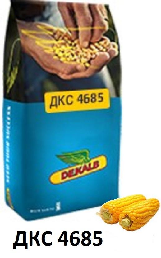 Семена кукурузы ДКС 4685 (ФАО 340) /Монсанто/ Насіння кукурудзи ДКС 4685 (ФАО 340)