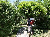 Профилактическая обработка растений от болезней и вредителей