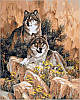 Раскраска по номерам Волки худ Феннинг Ларри (VP345) 40х50 см