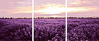 Картина по номерам MS14059 Триптих Лавандовое поле (50 х 150 см) Турбо