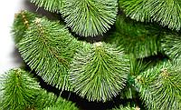 """Искусственная елка """"Сосна микс"""" (Сосна) 1.80м. Настоящий окрас (Пышная). Классическая., фото 1"""