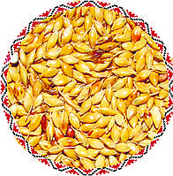 Семена  Суданка билявка