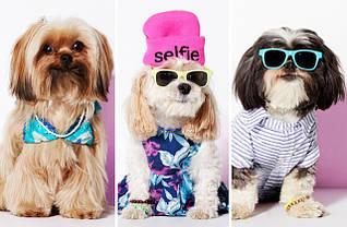 """Одежда для собак, коллекция """"Лето"""""""