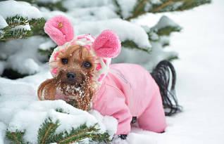 """Одежда для собак, коллекция """"Зима"""""""