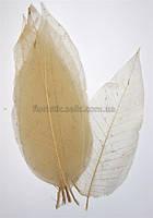 Листья скелетированные бежевые
