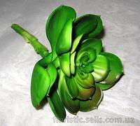 Суккулент Эхеверия 10 см, зеленая